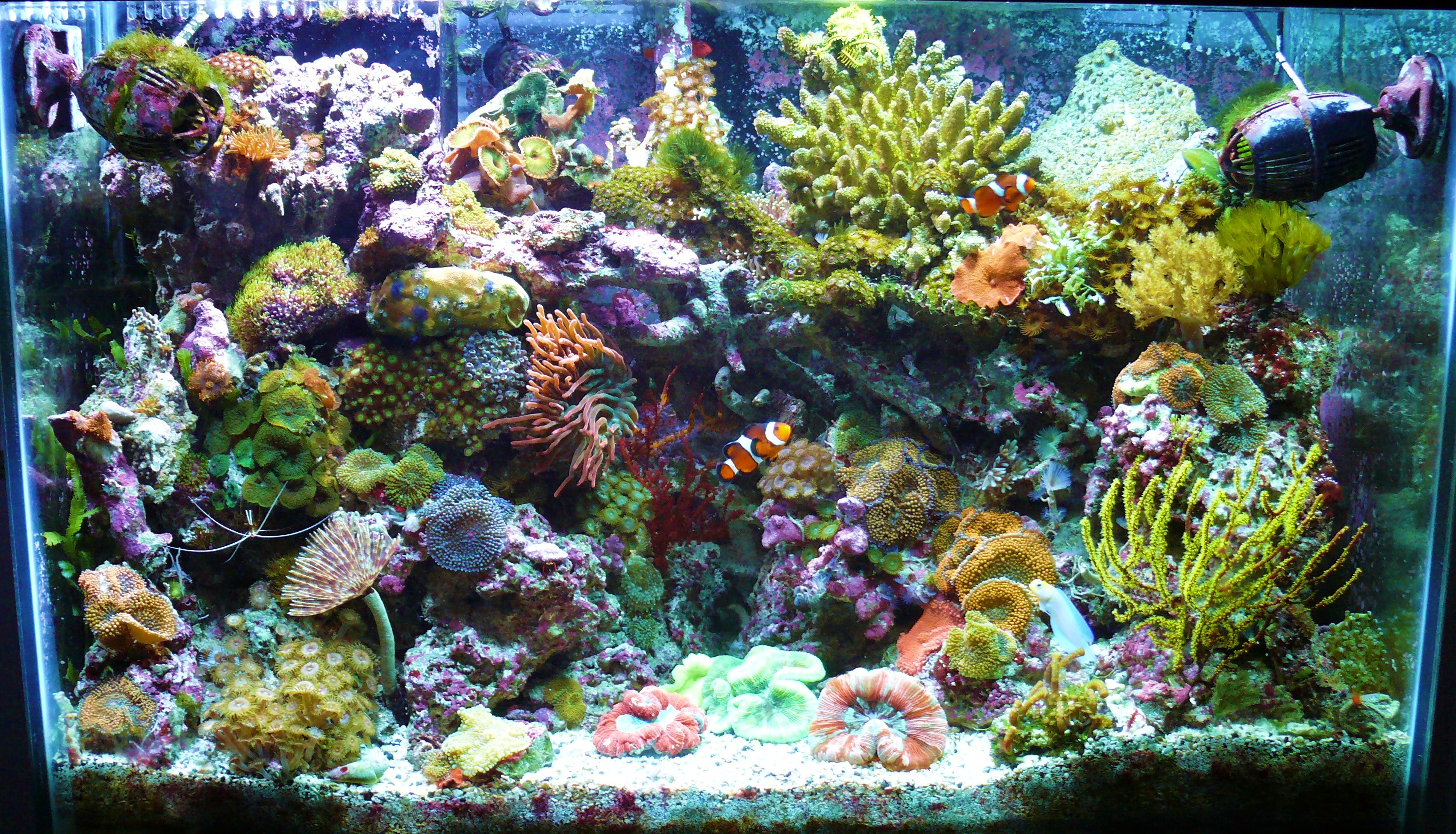 Reef Page