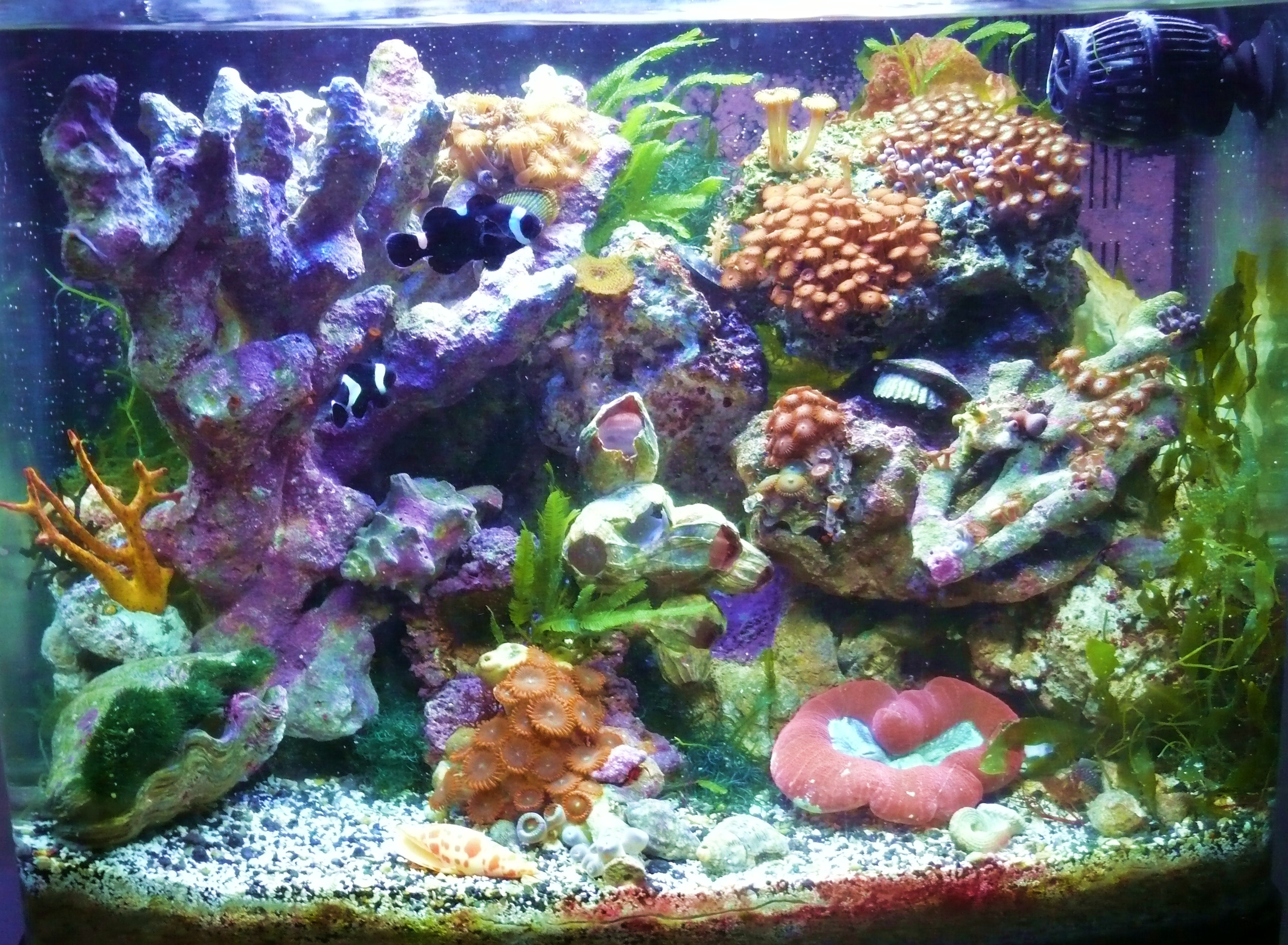 Frag nursery for coral propagation.